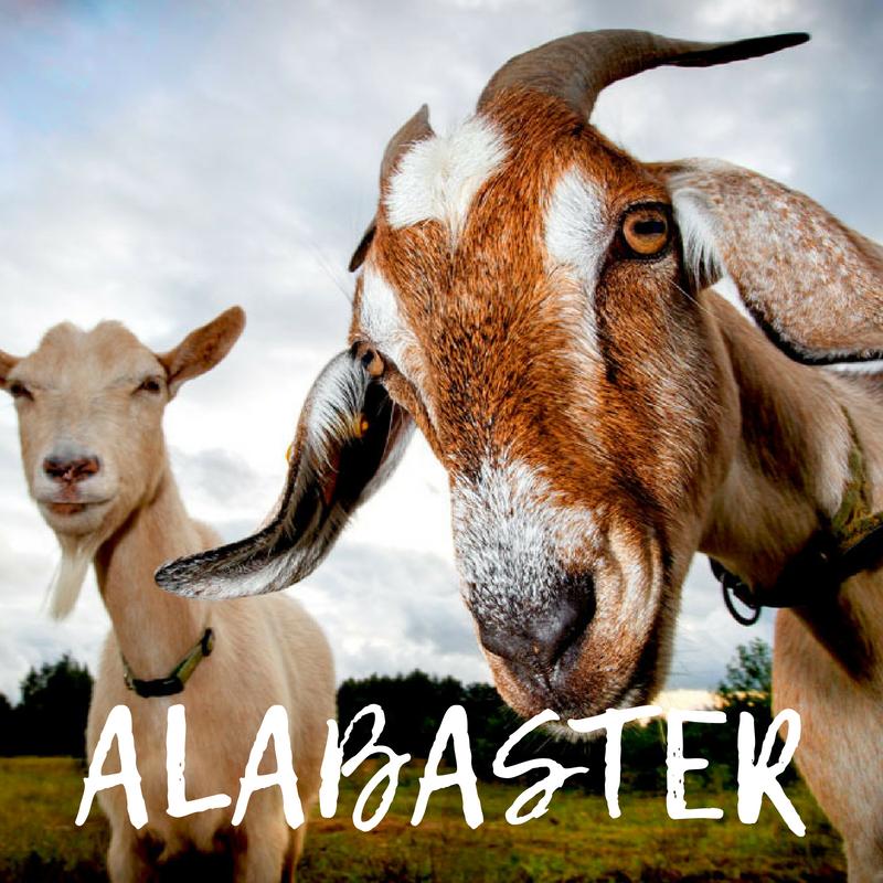 alabaster.png